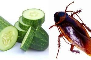 Home Remedies For Cockroaches At Home Remove Them From Home